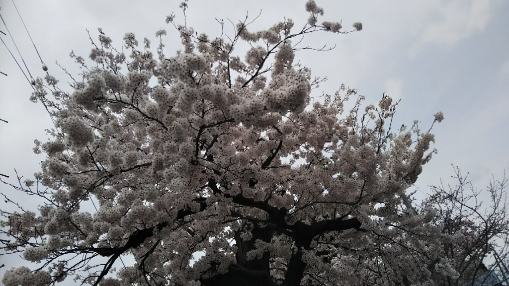 https://www.gurutto-aizu.com/db_img/cl_img/603/news/images/app_TIm1C3_201904212055.jpg